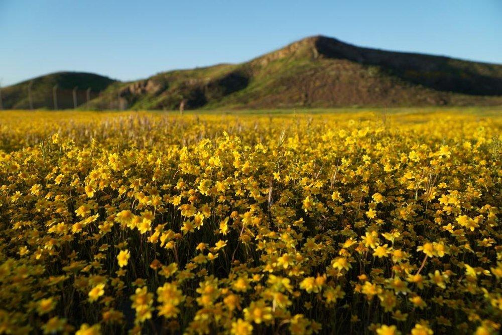 Westlake Vista Flowers 3.13.19.JPG