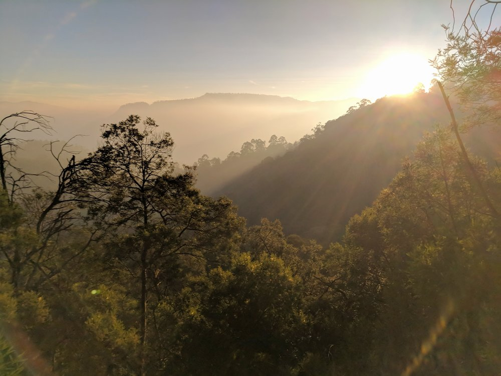 Not bad for a phone camera pointed directly into the sun. (Kodaikanal, Tamil Nadu, India; Jan 2018)