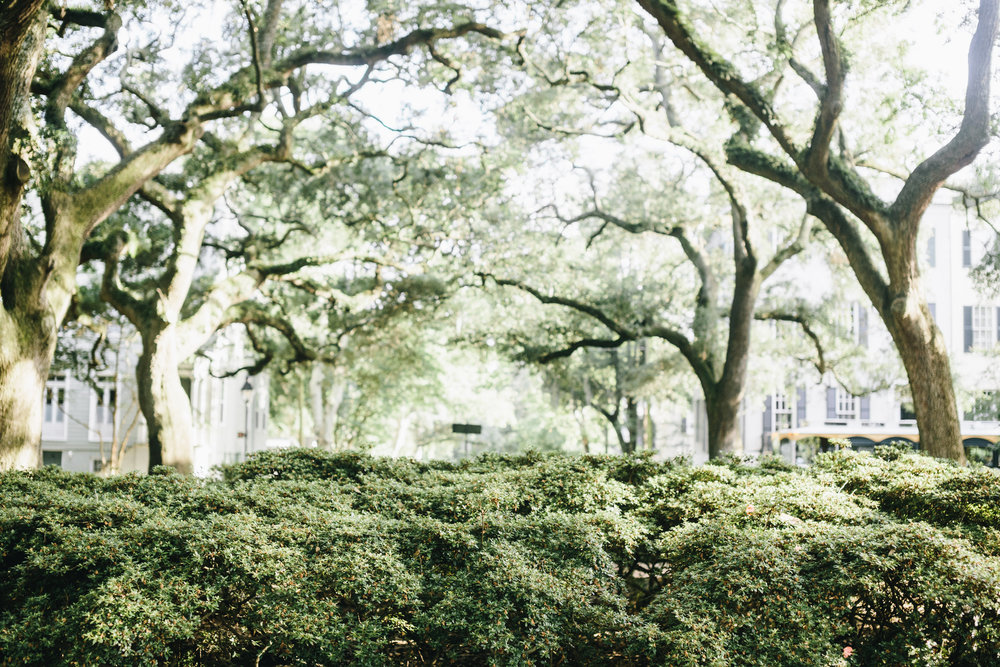 mackensey-alexander-photography-ivory-and-beau-bridal-boutique-from-this-day-forward-wedding-planning-sarah-seven-gwen-savannah-bridal-boutique-savannah-wedding-dresses-savannah-bridal-boutique-savannah-wedding-planner-savannah-weddings-41.jpg