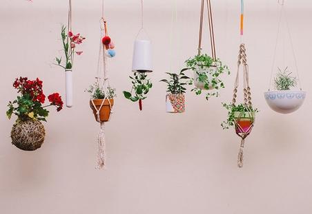 hanging vases.jpg