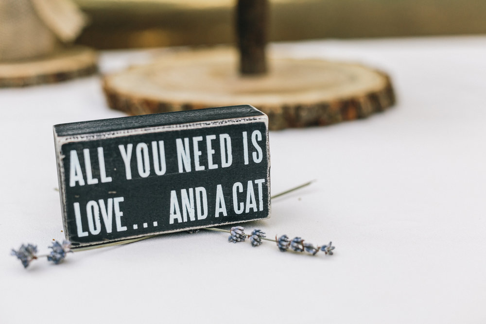 cat-lover-wedding-cats-wedding-ivory-and-beau-savannah-wedding-planner-savannah-event-designer-cat-wedding-decor-all-cat-signs-incorporate-cats-into-your-diy-wedding.jpg
