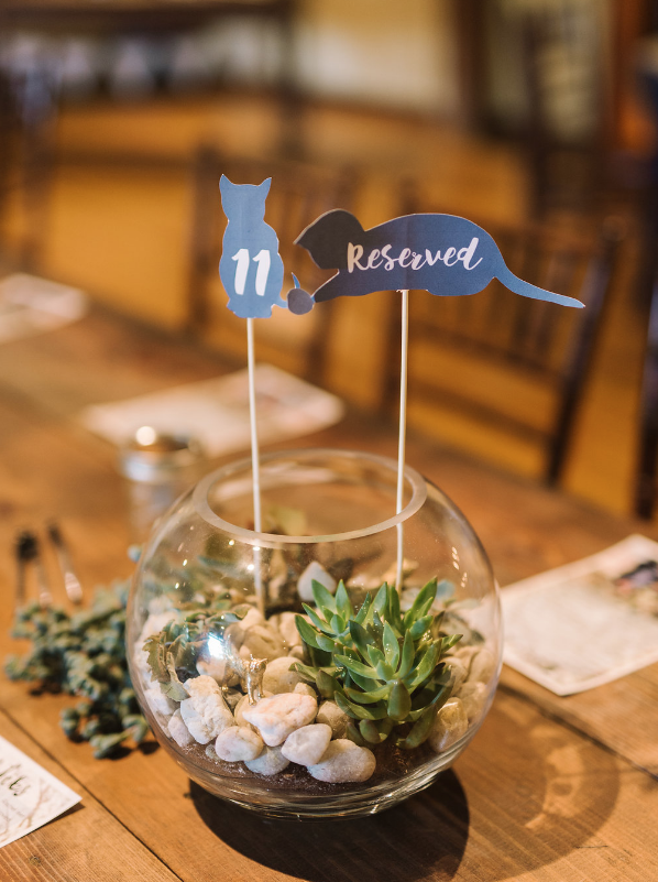 cat-lovers-wedding-ivory-and-beau-savannah-wedding-planner-savannah-event-designer-savannah-wedding-florist-cat-wedding-table-numbers-cat-cut-out-table-numbers-diy-rustic-wedding-savannah-weddings-pineola-farms-wedding.png