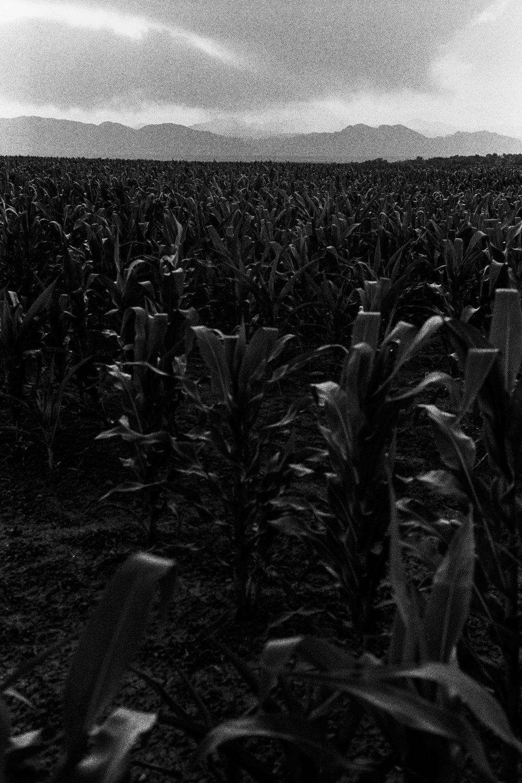 hp5_800_street_corn-4.jpg