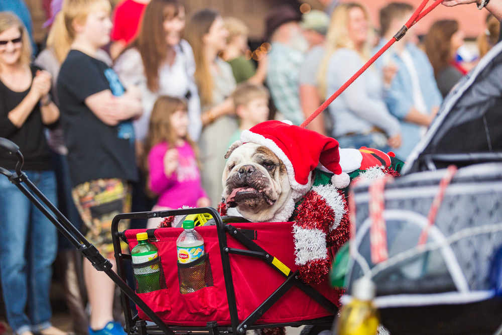 LF Christmas parade-13.jpg