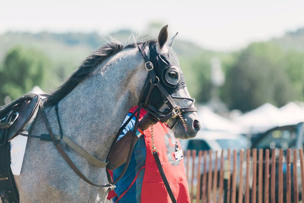 Brentwood-Tennessee-Iroquois-Steeplechase-2017_0033.jpg