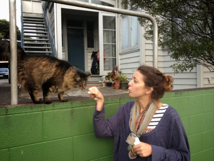 Auckland Cat