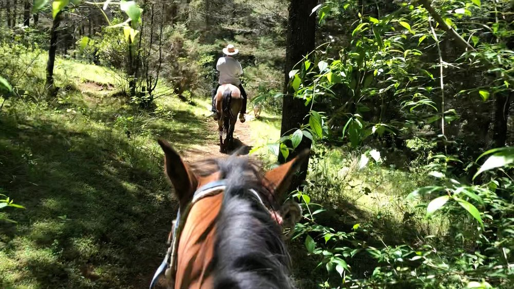 Horse riding through the ACTUAL woods