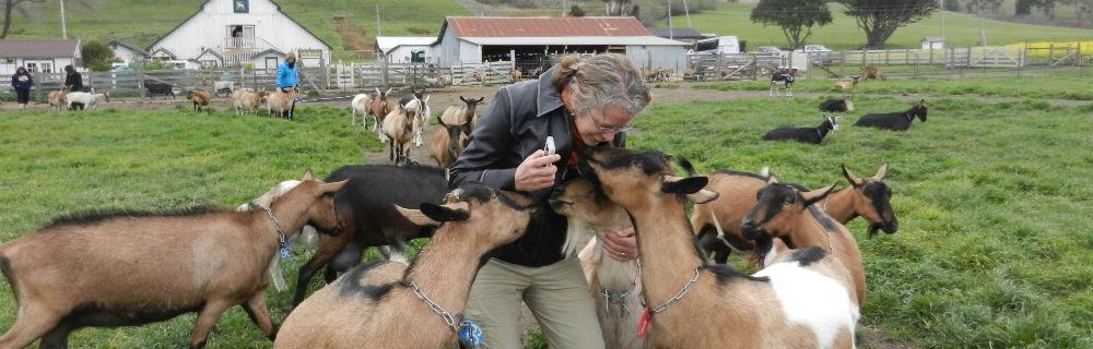 Sherri Befriends Goats