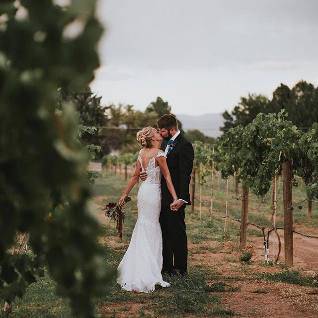Between the vines • • • • • • #grandjunction #grandjunctionwedding #telluridevideographer #tellurideelopement  #coloradoelopementvideographer #coloradoweddingvideographer #coloradowedding #nevadaelopementvideographer #nevadaelopementvideographer #californiaelopementvideographer #californiaweddingvideographer #durangowedding #bohowedding #bohemianwedding #retrowedding #elopementvideographer #weddingvideography #weddingvideographer #adventurouswedding #weddingwednesday #weddingcinematography #liveauthentic  #vintagewedding  #8weddingfilms #destinationwedding #destinationelopement #rockymountainbride
