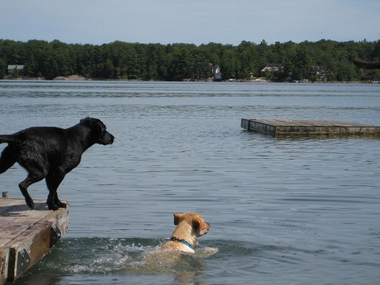 dog-jumping-off-dock.JPG
