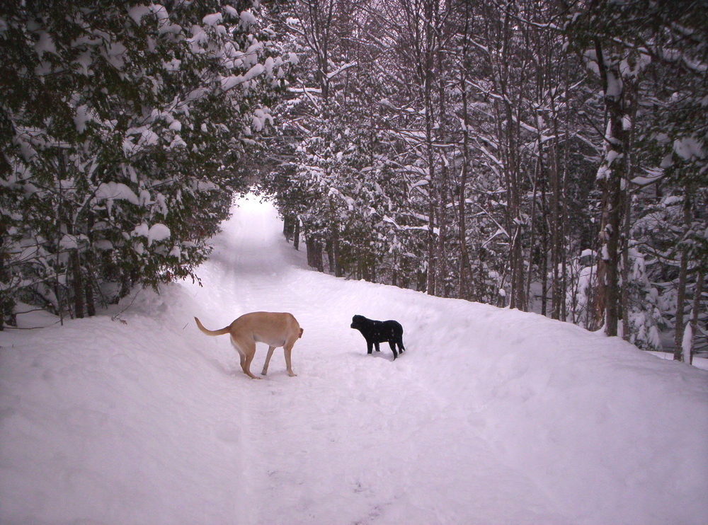sunny-and-bailey-on-a-snow-covered-road-amongst-the-trees.jpg
