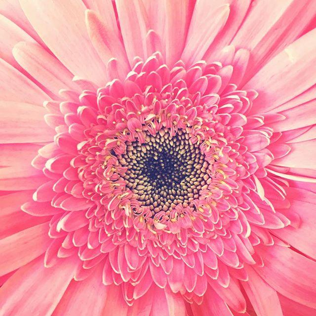 🍥#flowers #flowerpower #flowerstagram #losangles #blonde #buds #theblondebuds