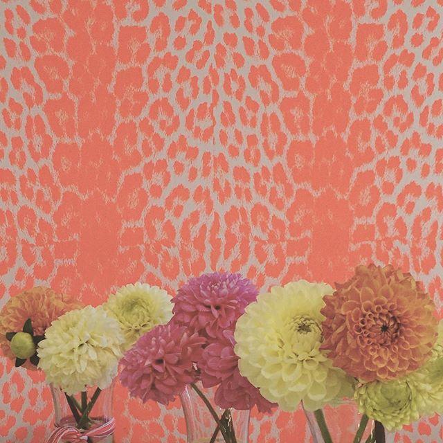 blooms #flowers #flowerstagram #flowerpower #floweroftheday #floweroftheday #blonde #buds #theblondebuds #losangeles