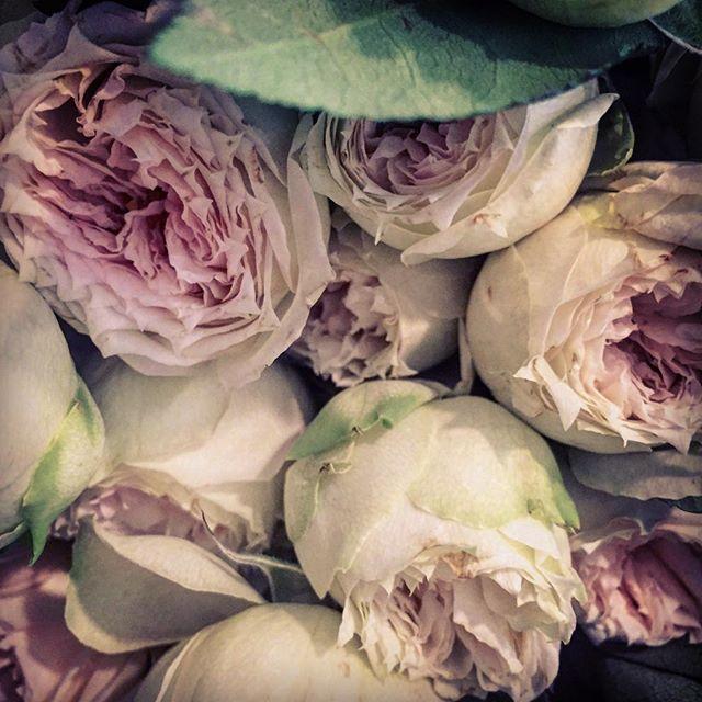 🍬#flowers #flowerstagram #flowerpower #blonde #theblondebuds #losangeles