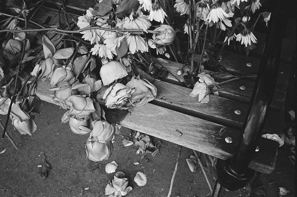 parkflowers__.jpg