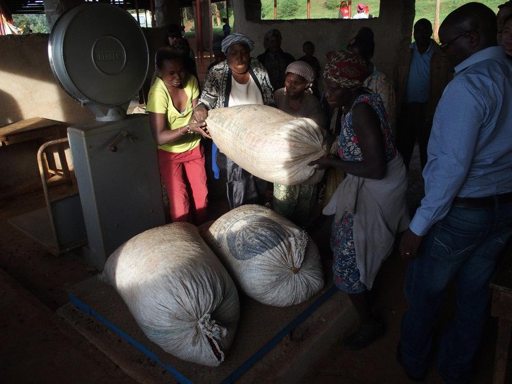 2016年12月に行ったKENYAのNgandu Factory