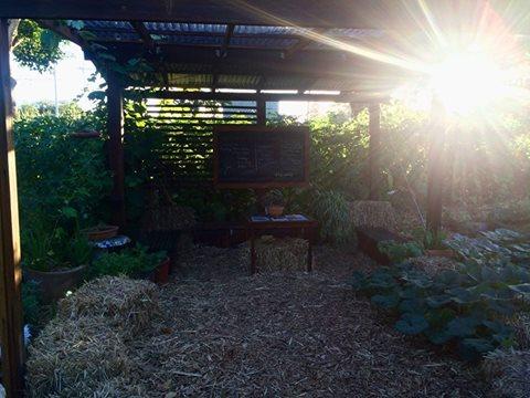 garden shelter.jpg