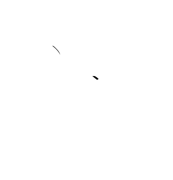 Four Paws Photography - Perth Pet Photography