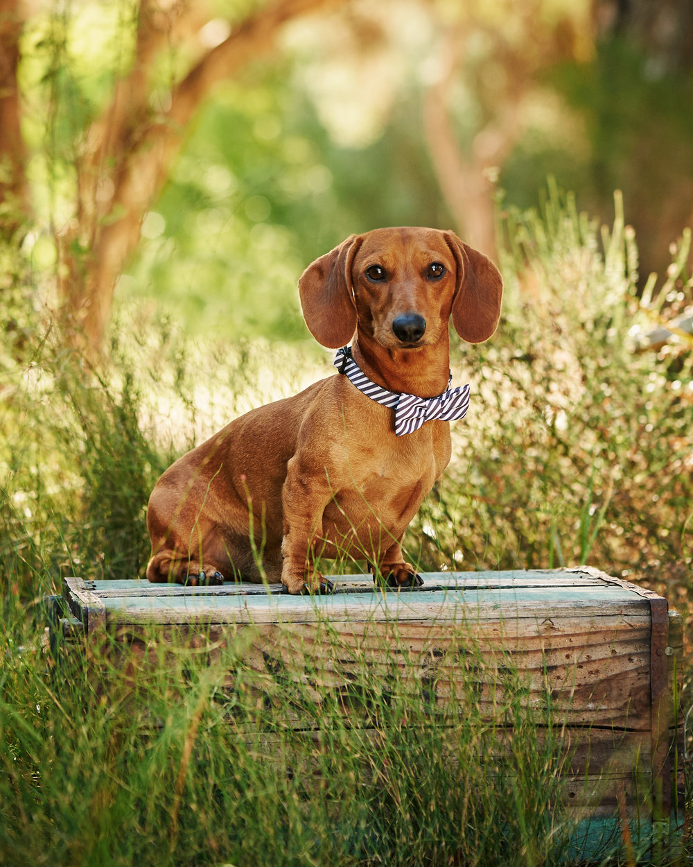 deutsch_hound_pet_dog_four_paws_portrait