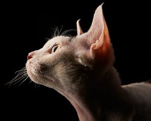 cat_pet_four_paws_portrait