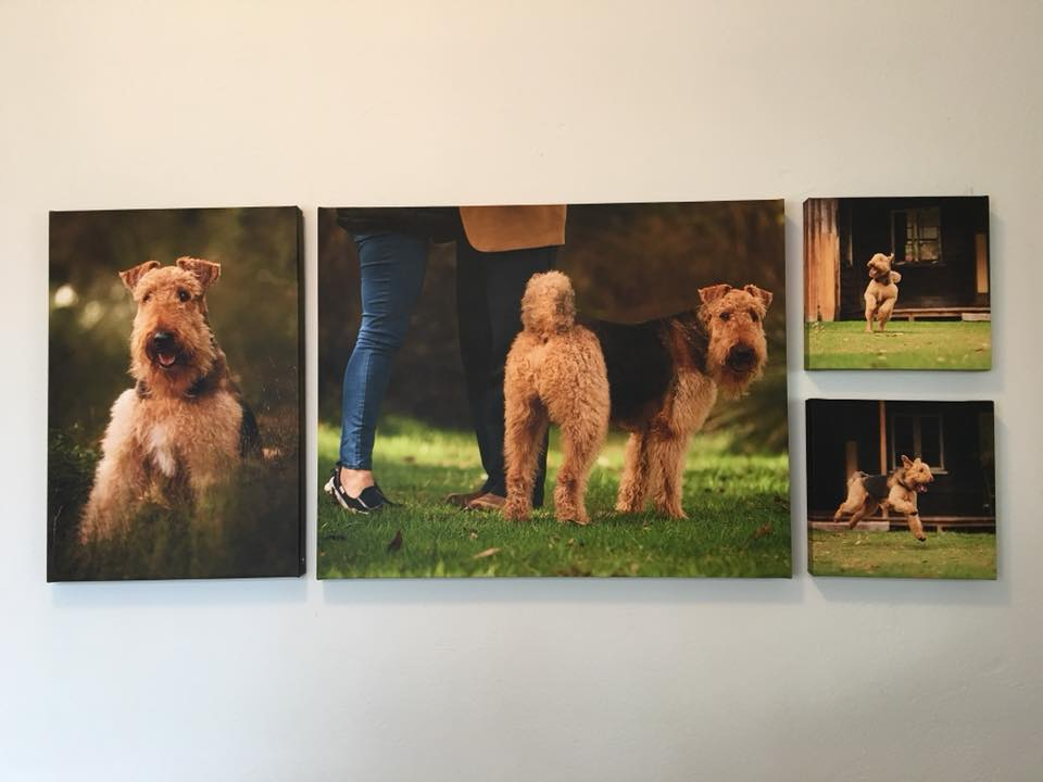 Airedale Ridley