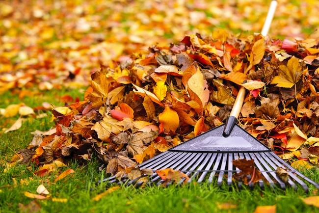 rakingleaves.jpg