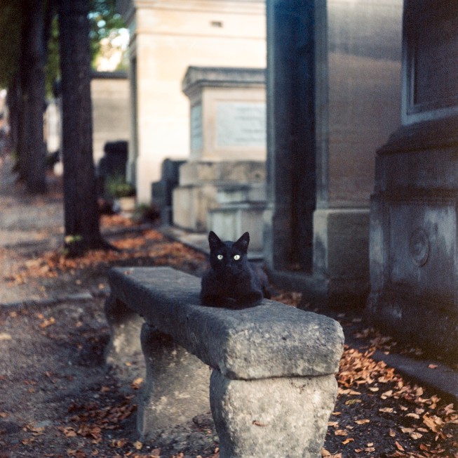 PereLachaise_Cat.png