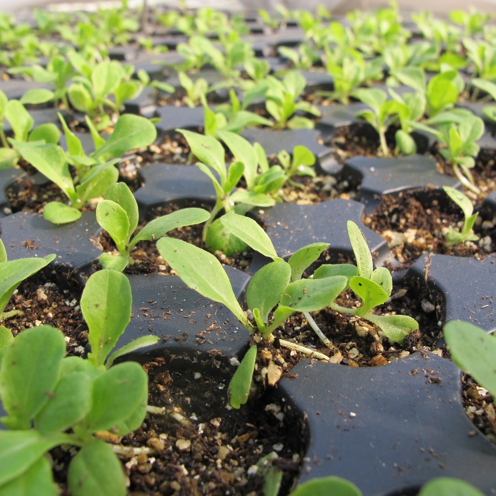 Annual crops are started from organic seed. Varieties that require warmer soils and longer days are started in February, other crops are direct sown on the field.