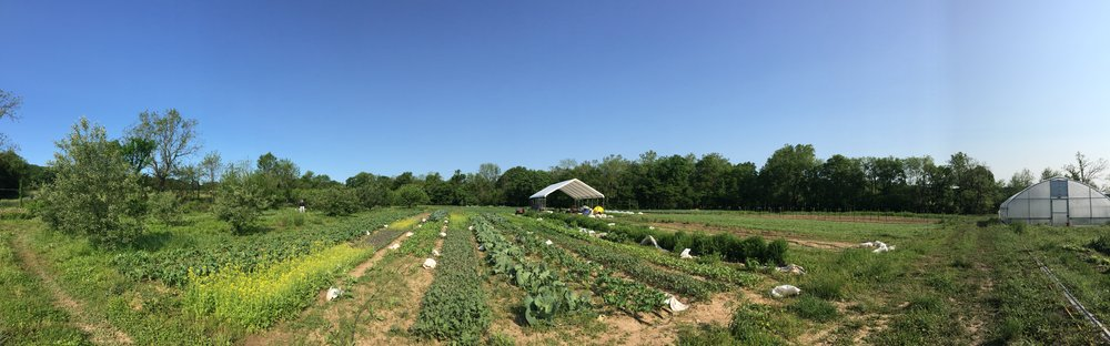 growing field pano.jpg