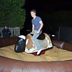 Rent a bucking bull