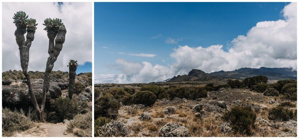 Kilimanjaro_0025.jpg