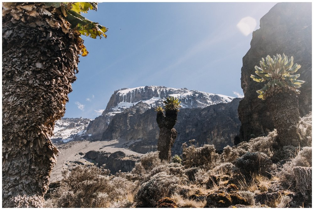 Kilimanjaro_0071.jpg