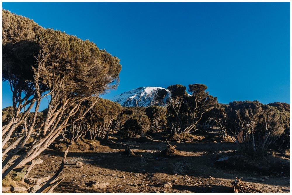 Kilimanjaro_0129.jpg