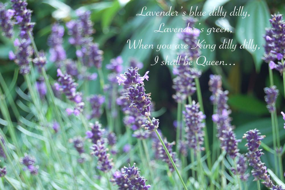 lavendersblue.jpg