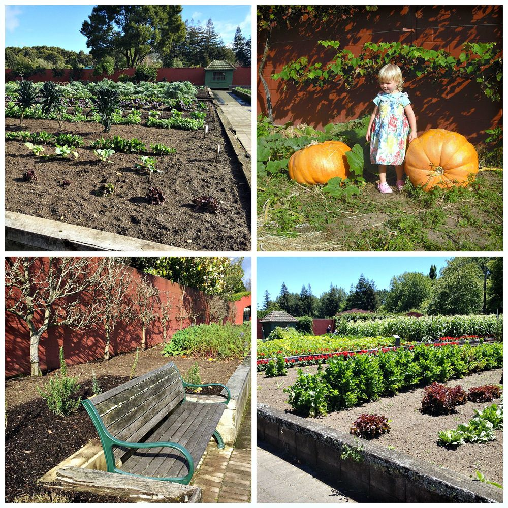 An amazing walled garden filled with a constantly revolving array of fruits and vegetables - yum!