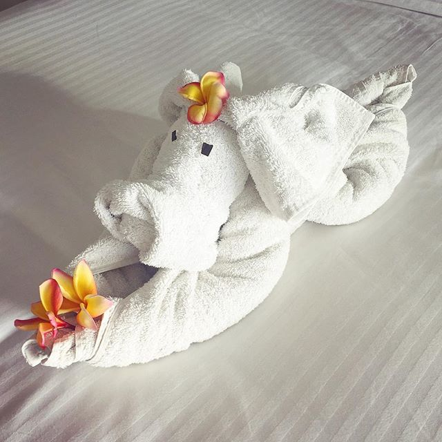 Lovelyness is... coming back to our hotel room to find this cute towel-elephant on the Little Lovelies' bed, a very thoughtful gesture from one of the beautiful Fijian ladies at the @shangrila.fiji whose job it is to service the rooms💖🐘🌺. It can be so easy to overlook all of the hard work put in by those in the service industry who make a living from taking care of our wellbeing wherever we may find ourselves (I've done the job too so I know how it feels), but sometimes just a simple gesture makes all the difference and this clever little creation is a memory I know the girls will talk about for years to come! So thank you kind & creative stranger for making Arabella & Lucy's day 💕😘 #towelcreations #lovelymaid #elephantastic #fijihappy #kindness #thoughtfulgesture #inpursuitoflovelyness #travellingwithkids #happykidshappyholidays @shangrila.fiji #nicesurprise #hotelservice #servicewithasmile #aboveandbeyond #lovelyness #shangrila #shangrilahotel