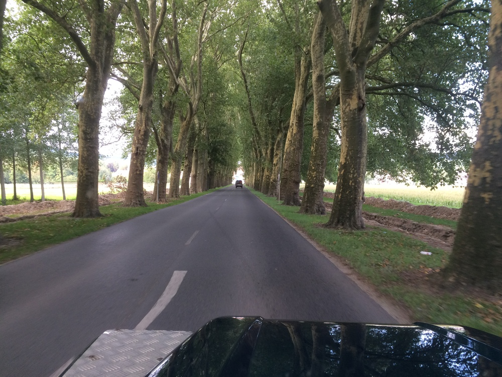 Classic French tree lined road into Fleury-la-Rivière
