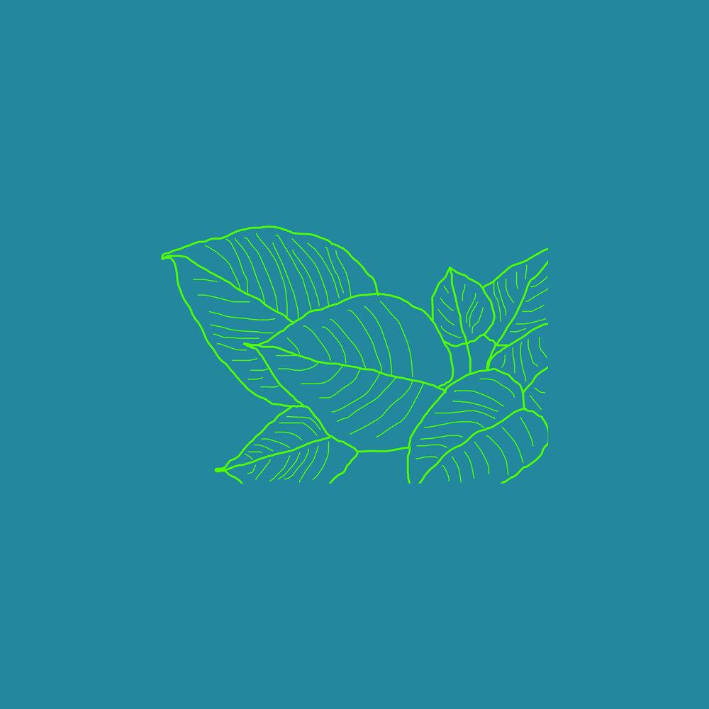 plant outline 5.jpg