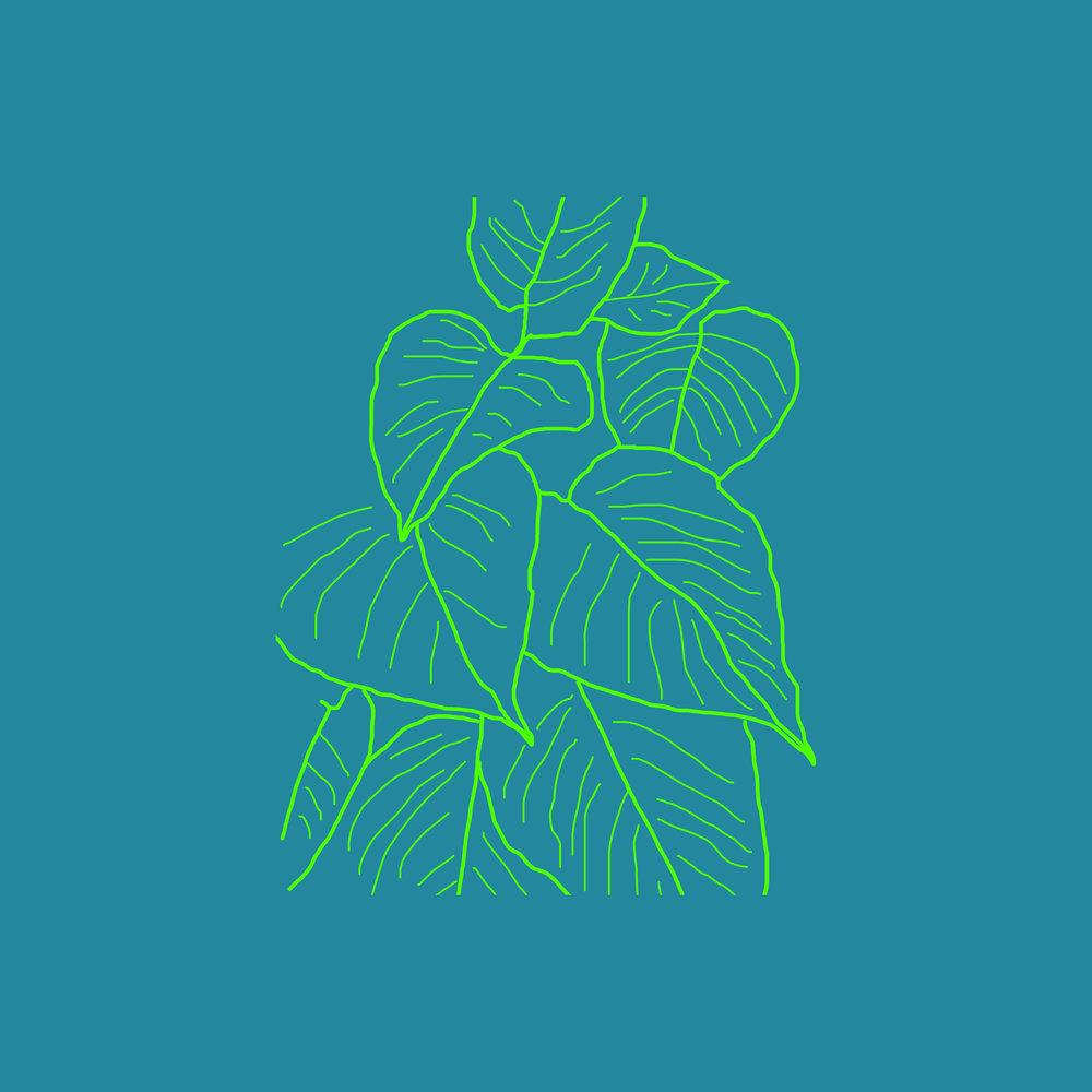 plant outline 4.jpg