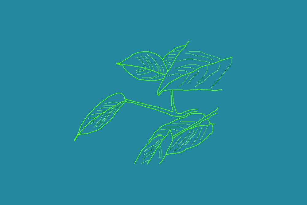 plant outline 1.jpg