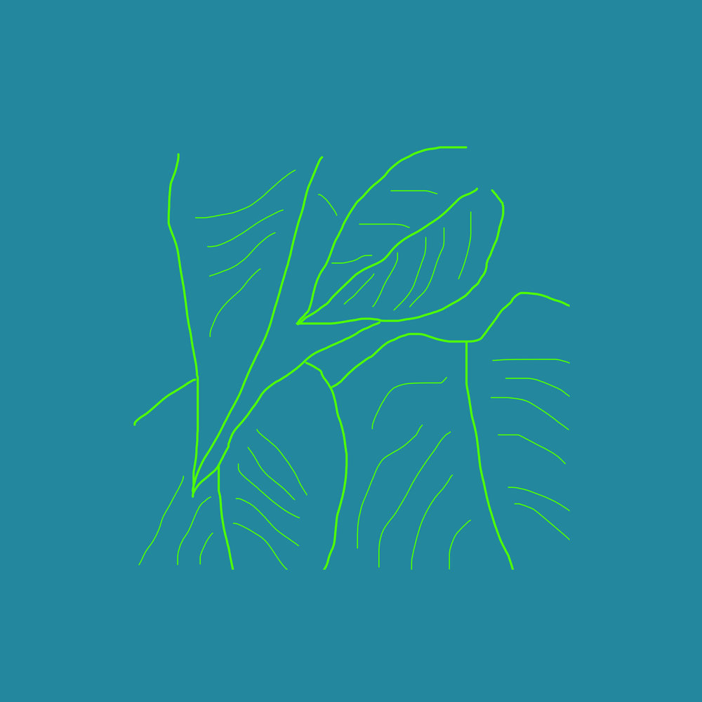 plant outline 3.jpg