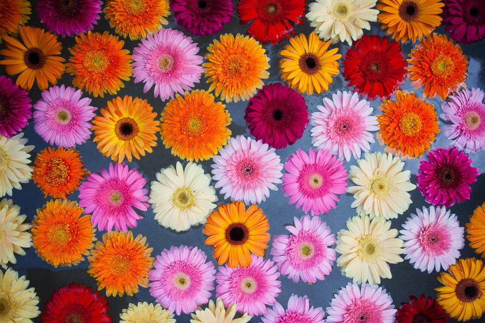 flowers-48.jpg