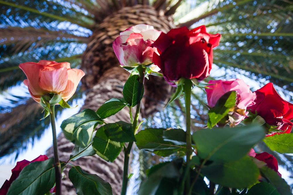 flowers-49.jpg