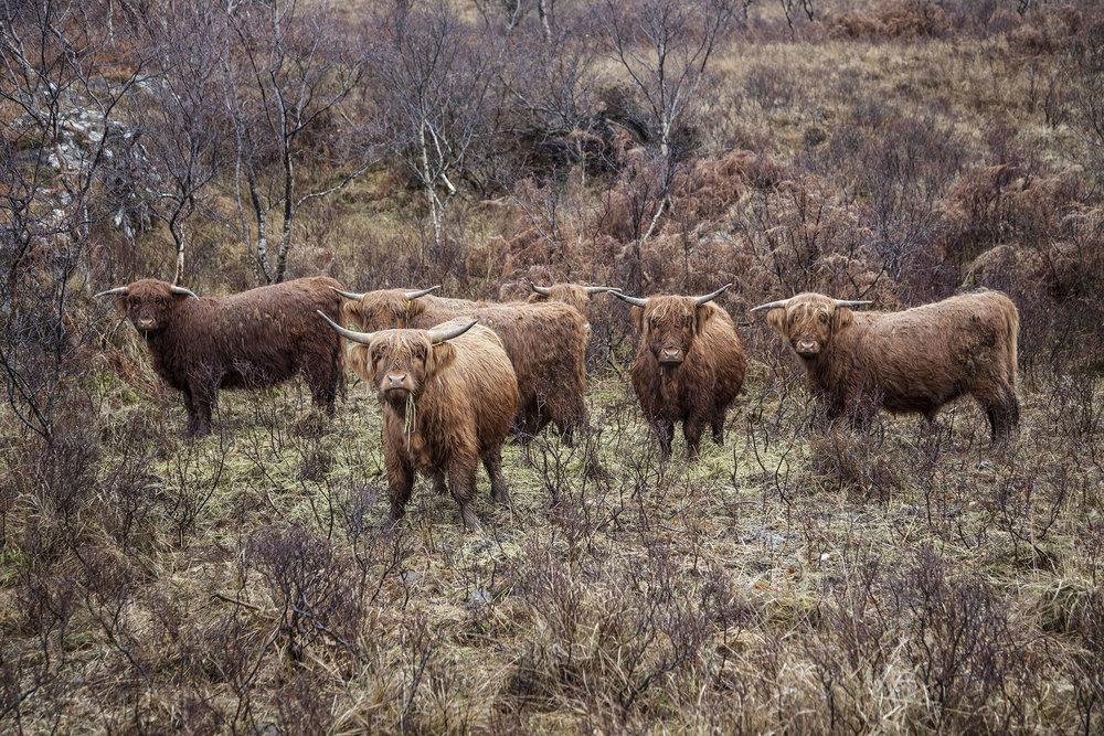 147_IMG_8175_Scotland_Photo_by_Paul_Marc_Mitchell.jpg