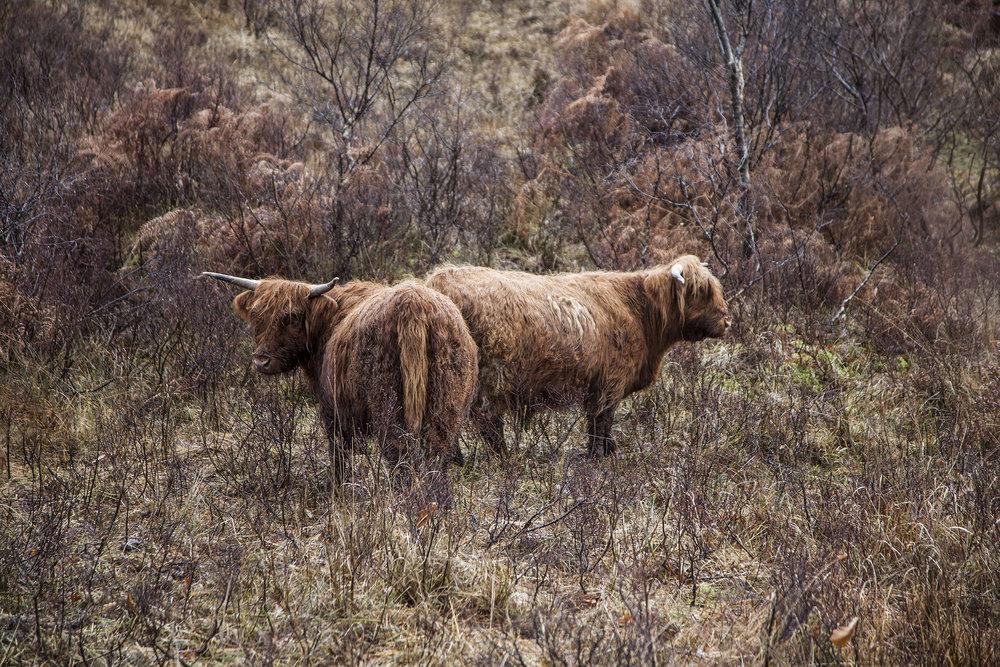 156_IMG_8217_Scotland_Photo_by_Paul_Marc_Mitchell.jpg