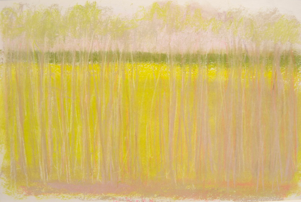 Green Stripe (Long Version) , 2010  Pastel on paper  12 x 18 inches
