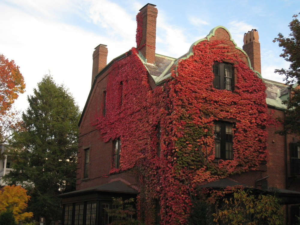 """House with Red Ivy,"" Irina Drozina 3rd Place, 2012"