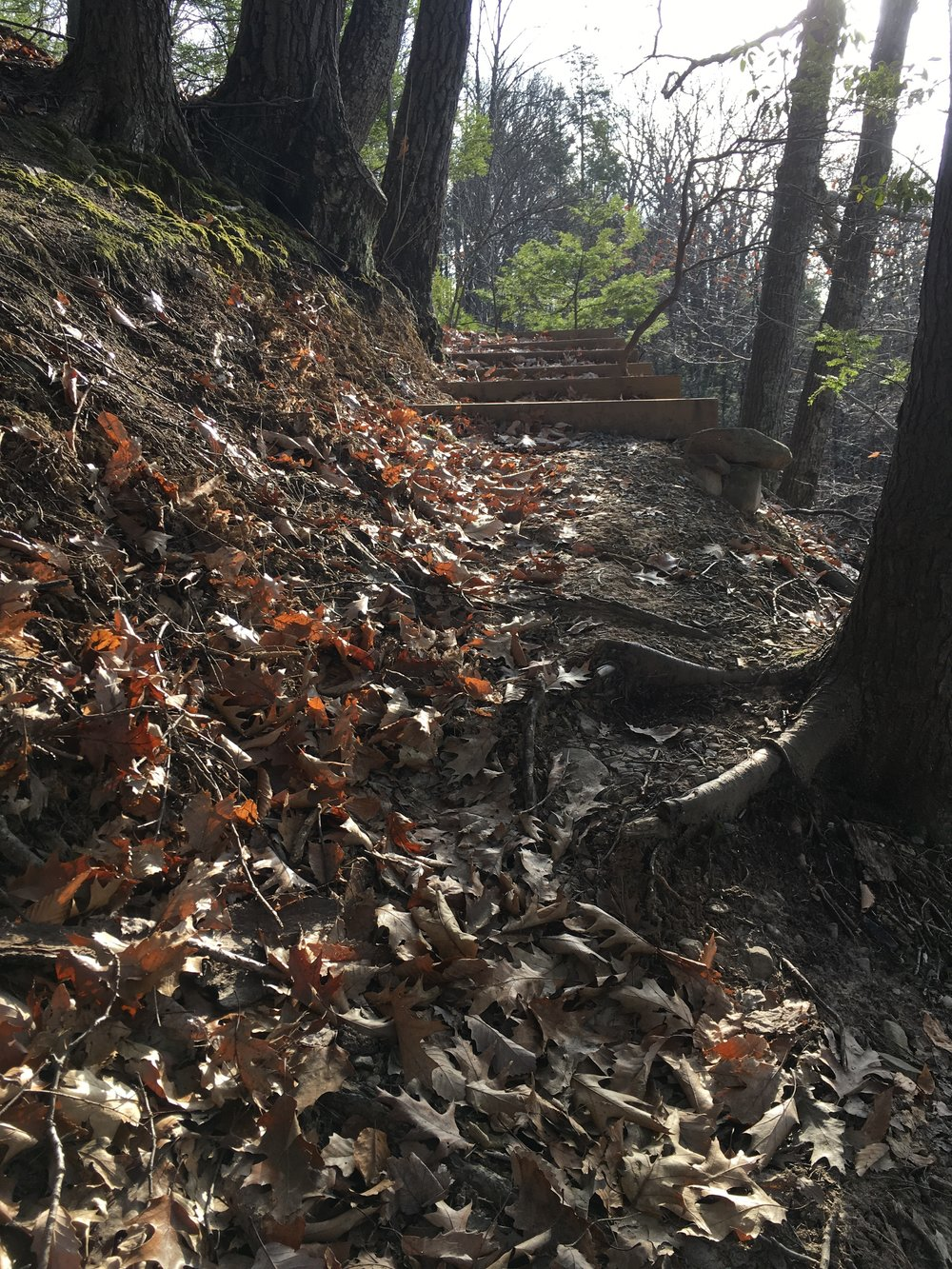 The  CIC  ridge trail is a short hike that offers some mild elevation gain, switchbacks, and in winter, a pleasant view from some picnic tables.