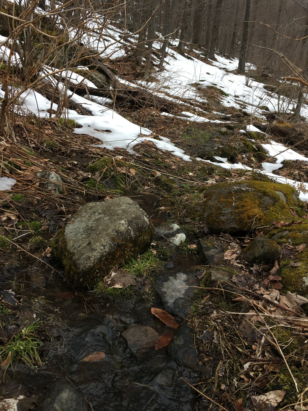 Signs of spring are emerging! Expect wet trails with mixed snow and ice wherever you go in the Park this weekend.