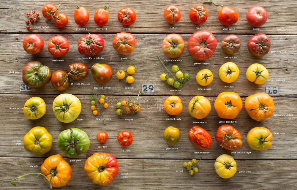 From Craig LeHoullier's book  Epic Tomatoes: How to Select & Grow the Best Varieties of All Time.
